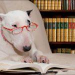 10 Puntos básicos para perros adoptados